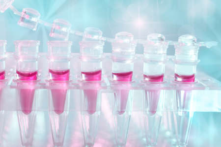 amplification: Tubes for DNA amplification by PCR