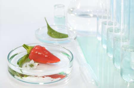 riesgo quimico: Prueba de pimientos rojos de contaminaci�n con pesticidas en el laboratorio