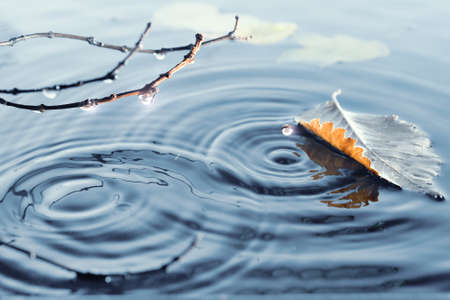 Autumn leaves on rippled water surface 版權商用圖片 - 32838382
