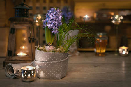 Delicate purple hyacinth on vintage kitchen lit with candles