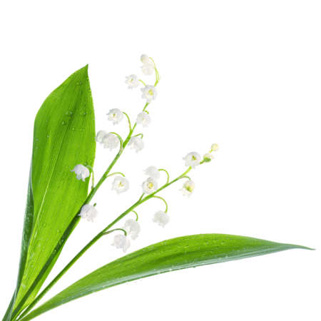 muguet: Closeup on lily of the valley flowers on white background