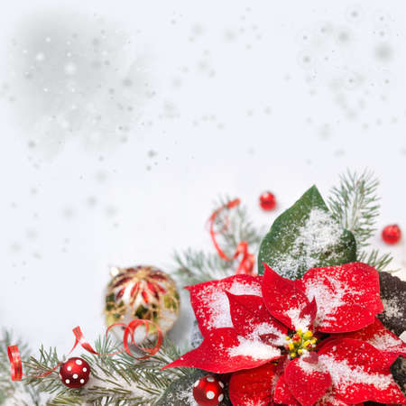 poinsettia: Christmas background with poinsettia, Christmas tree and baubles on snow Stock Photo