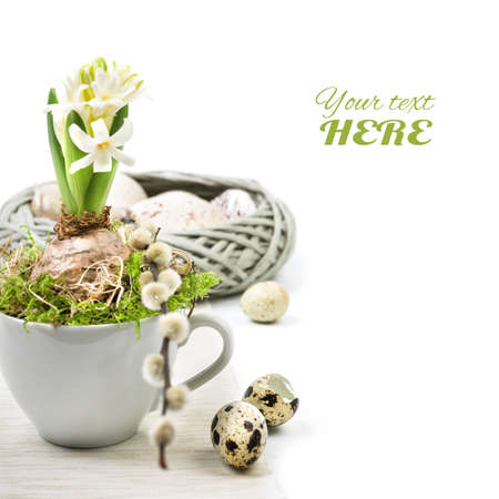 pussy yellow: Easter corner composition with white hyacinth in white coffee cup, space for your text