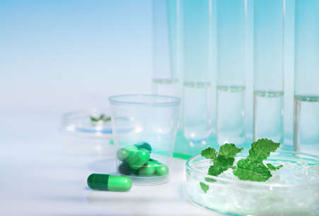 medium close up: Peppermint capsules, research and development from fresh mint
