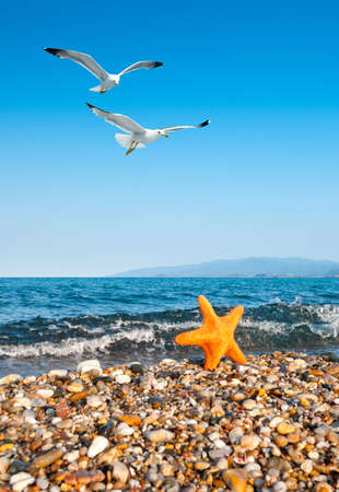 Pebble Beach: Sea star by the sea and seagulls, focus on the seagulls