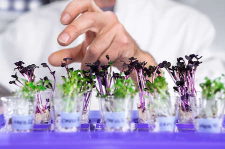 Hand ofsenior male tech selects a batch of cress-salat for quality control