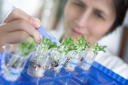 Female scientist or tech picks a cress sprout from a test jar for analysis. Shallow DOF, focus o the plants close to tweezers Stockfoto