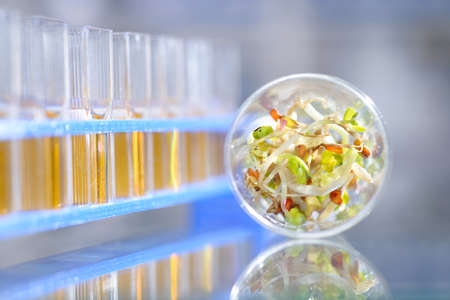 assure: Chemical tests to assure highest quality and safety of been sprouts