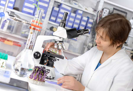 control de calidad: Control de calidad. Cient�fico superior o coles de pruebas berro tecnolog�a bajo el microscopio. Centrarse en la mano con la muestra y el microscopio.