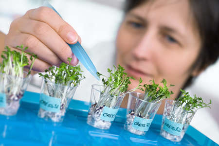 biological: Quality control. Senior scientist or tech picks cress sprouts for testing Stock Photo