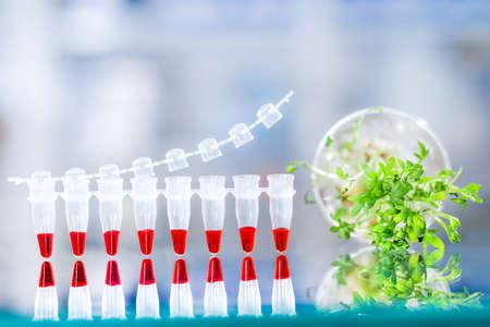 amplification: Contr�le de la qualit� avec le test d'amplification d'ADN, bande PCR pour cet essai et l'�chantillon de salade de cresson pour le test. Espace pour votre texte