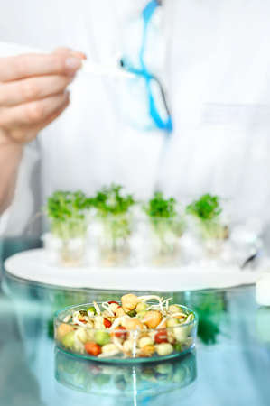 Health background with unrecognizable human. Quality control of bean sprouts for signs of bacterial or chemical contamination, Shallow DOF, focus on the back side of the dish.