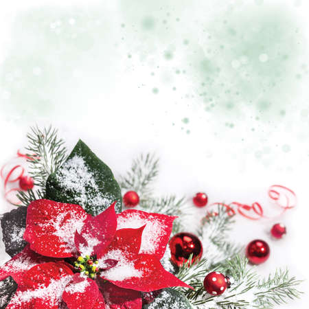 poinsettia: Christmas background with poinsettia, Christmas tree and baubles on snow, space for your text