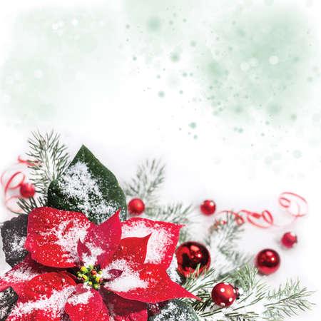 flores en esquina: Fondo de la Navidad con el poinsettia, �rbol de Navidad y adornos en la nieve, el espacio para el texto