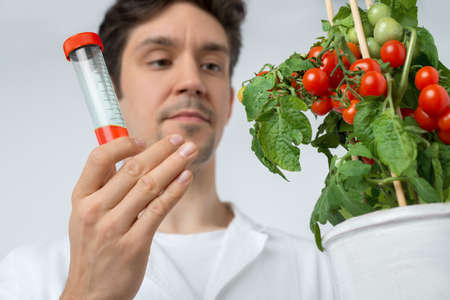technical assistant: Attentive male biologist or tech with tomato plant and red sample. Shallow DOF, focus on the hand that holds sample.