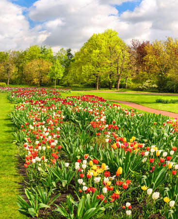 tulip: Line of colorful tilups in spring garden Stock Photo
