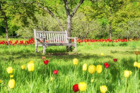 Lege houten bank onder vers groen in een park. Spring achtergrond element. Stockfoto
