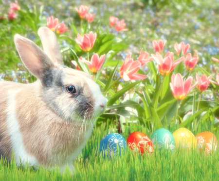 bunnie: Cute bunny sitting in the grass with Easter Eggs and red tulips behind. Happy Easter!