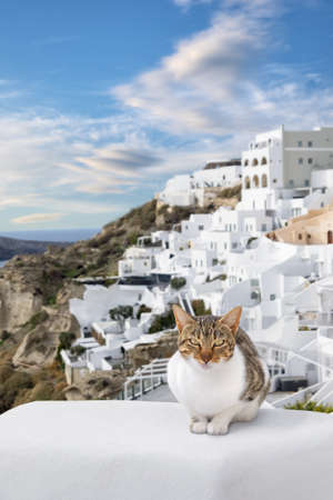 Stripy cat enjoys nice weather on the stone fence in Oia village, Santorini island, Greece.