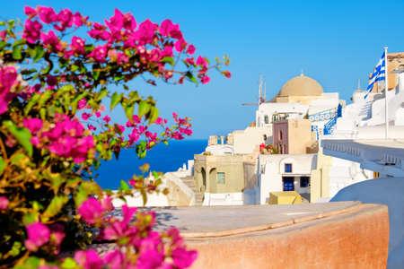 Oia village, Santorini island, Greece, on a bright day, with purple Bougainvillea in front.