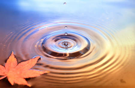 Dry marple leaf on water surface, rings from water drops. Fall background
