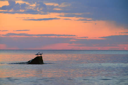 horizon reflection: Two seagulls sitting on a stone over the calm sea surface on a sunset