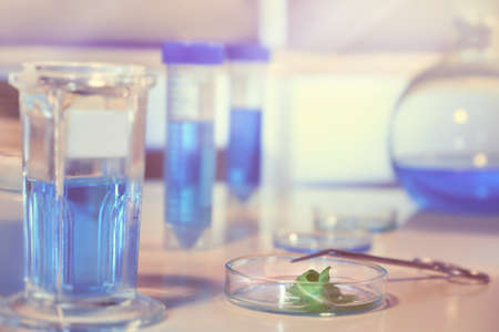 Toned science background in purple and white. Green leaf in a petri dish, with laboratory out of focus.