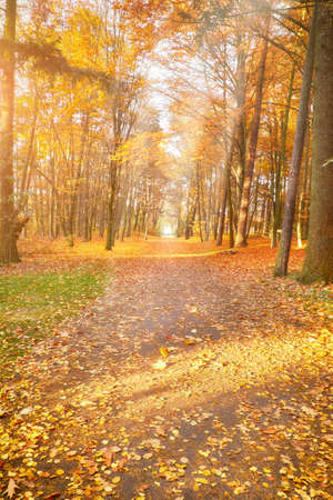 Empty Autumn alley in the park, vertical fall background in yellow and orange
