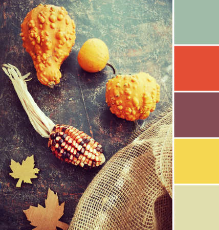 Analogous color matching palette from Autumn image with decorative pumpkins and dry corn on dark background with burlap Stock Photo