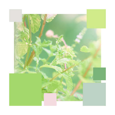 Mint palette. Color matching analogous palette from close-up image of mint leaves outdoors, adjucent shades of green