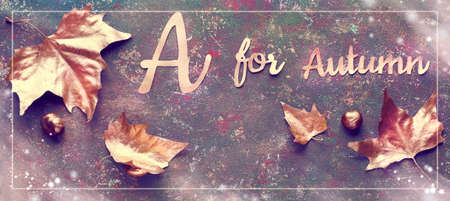 Autumn flat lay with painted golden leaves and text A for Autumn on dark brown textured bacgkrdound. Panoramic image with frame and light overlays, banner composition.