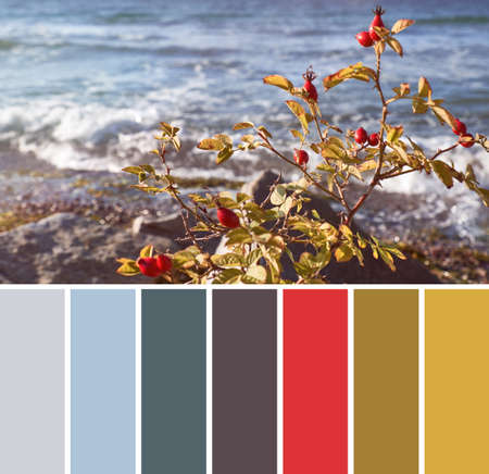 Color matching complementary palette from image of rosehip bush with red berries on a seaside on a sunny day