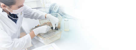 Female scientist performs animal testing in modern laboratory, scientific or biotech panoramic background with copy-space