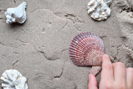 Childs hand picking up shells from wet sand on a sandy beach, sand and sea background with copy-space