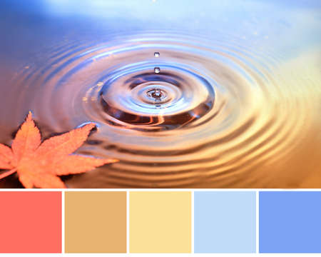 Color matching Autumn palette from image of dry marple leaf on water surface, rings from water drops. Fall background in orange, yellow and light purple