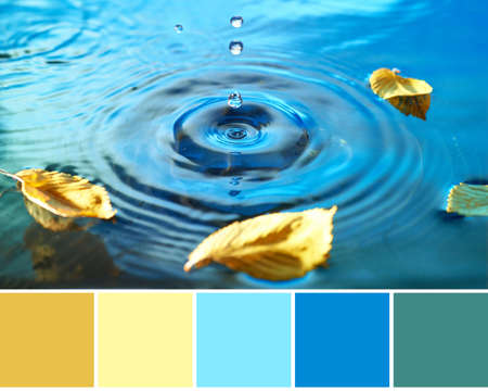 Color matching Autumn palette from image of Autumn leaves in water pool, rings from water drops. Fall background in blue, yellow and mustard colors