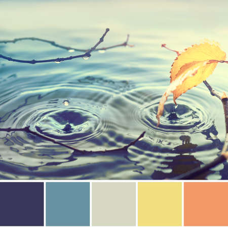 Color matching Autumn palette from image of Autumn leaves in water pool, rings from water drops. Toned Fall background in blue, nawy blue, yellow and orange colors. Foto de archivo - 132049694