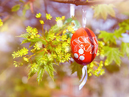 Happy Easter! Eco friendly traditional wooden Easter egg painted red with white floral ornament hanging on maple tree with young leaves and yellow flowers outdoors.