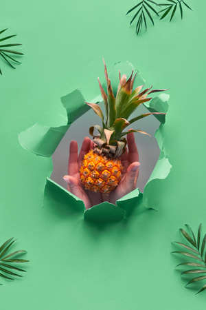 Small ripe orange pineapple cradled in human hands. Hands with the fruit show out of torn paper hole. Tropical green geometric background with palm leaves Stockfoto