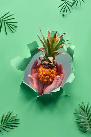 Small ripe orange pineapple cradled in human hands. Hands with the fruit show out of ripped paper hole. Tropical green geometric background with palm leaves