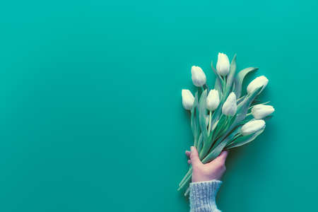 Woman hand hold bunch of white tulips on mint green background. Spring flat lay, top view with copy-space, text space. Mothers day, international women day March 8, birthday, anniversary design.