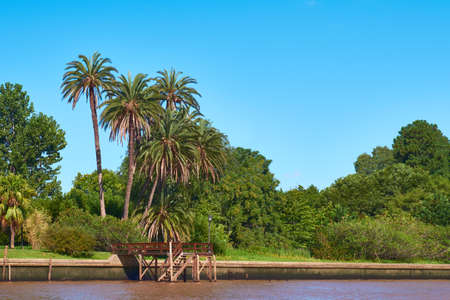 Lush vegetation, palm trees. Tigra delta in Argentina, river system of the Parana Delta North from capital city Buenos Aires. Standard-Bild - 141629947