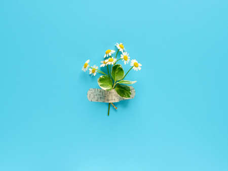 Chamomile flower and grass bouquet attached with medical aid patch to blue mint background. Creative minimalist flat lay, top view from above. Stock Photo
