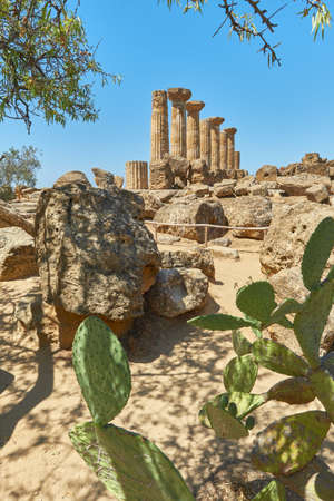 Ruin of the ancient greek temple of Heracles with succulents in the foreground, Agrigento, Sicily Italy