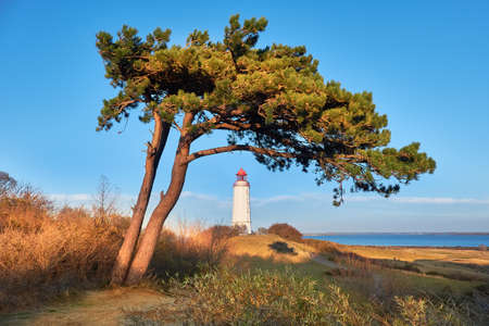 White lighthouse Dornbusch on Baltic sea, Hiddensee island in Germany with pine tree.