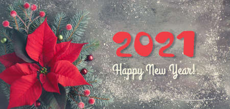 Christmas flower poinsettia and decorated fir tree twigs on dark textured background, copy-space Banco de Imagens
