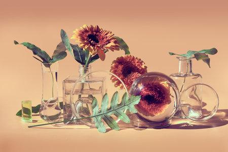 Flowers, transparent glass jars, bottles, vials. Reflections, distorted floral elements. Desaturated beige background. Natural sunlight, long shadows. Red gerbera, exotic leaves. Biophilia design.