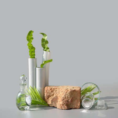 Natural Green laboratory. Brick podium, space for product. Abstract floral arrangement. Reflections of leaves distorted in water. Exotic green leaves in transparent glass vials, jars, Petri dishes. 版權商用圖片 - 166780036