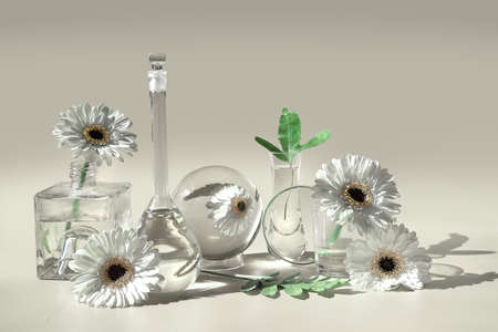 Flowers, transparent glass jars, bottles, vials. Reflections, distorted floral elements. Desaturated grey background. Natural sunlight, long shadows. White gerbera daisy flowers, exotic leaves. 版權商用圖片