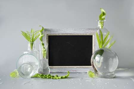 Natural Green laboratory. Text space, copy-space blackboard, chalk board. Exotic green leaves in transparent glass flasks, vials, Petri dishes. Reflections, floral elements distorted in water. 版權商用圖片 - 166856852